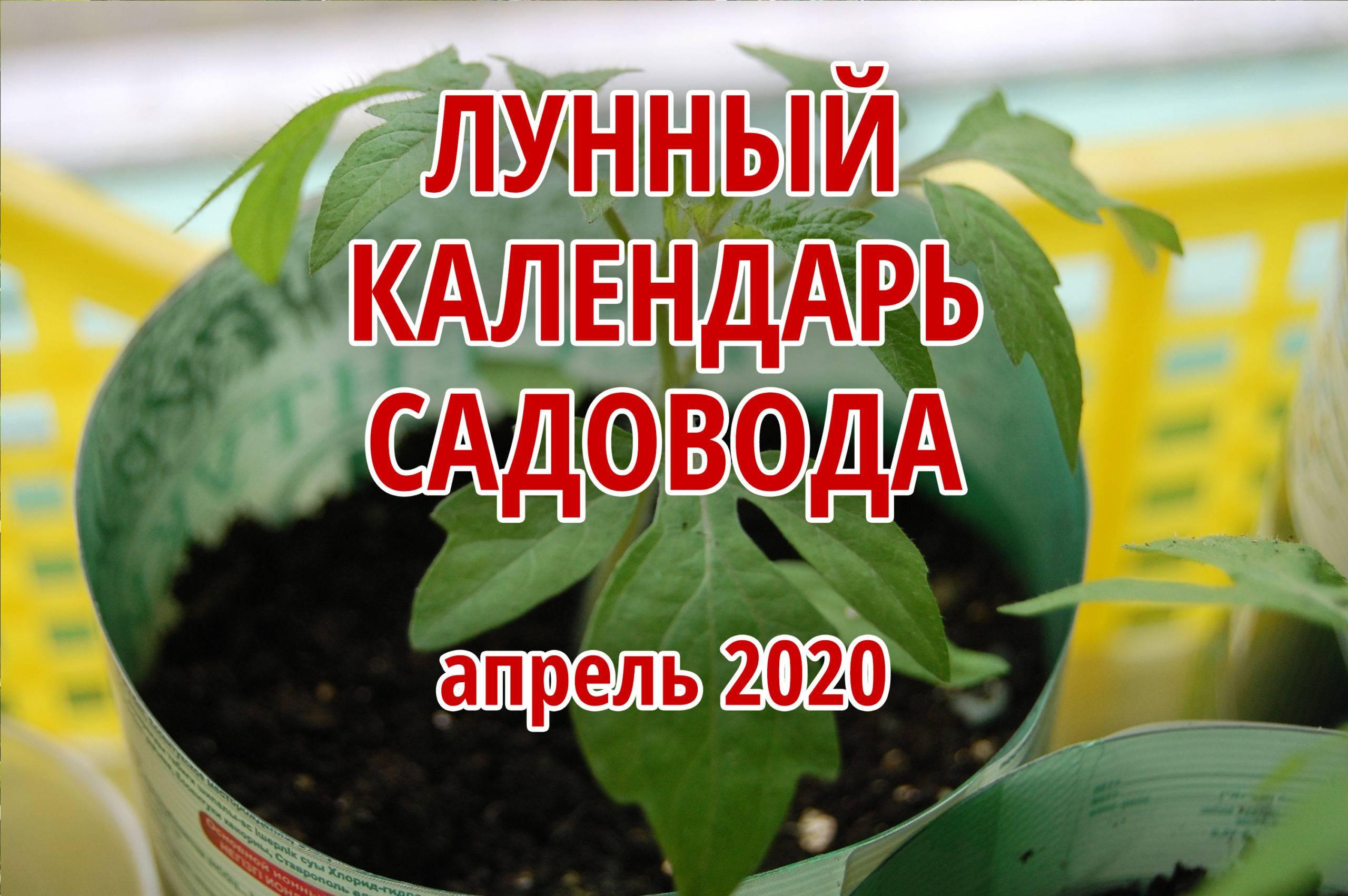 Лунный посевной календарь садовода, огородника и цветовода на 2020 год