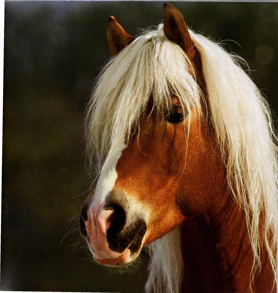 Виды и особенности естественных и искусственных аллюров лошадей