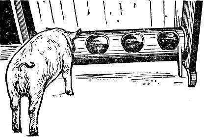 Поилки для свиней: как сделать и установить своими руками, виды поилок, пошаговая инструкция изготовления, фото, видео
