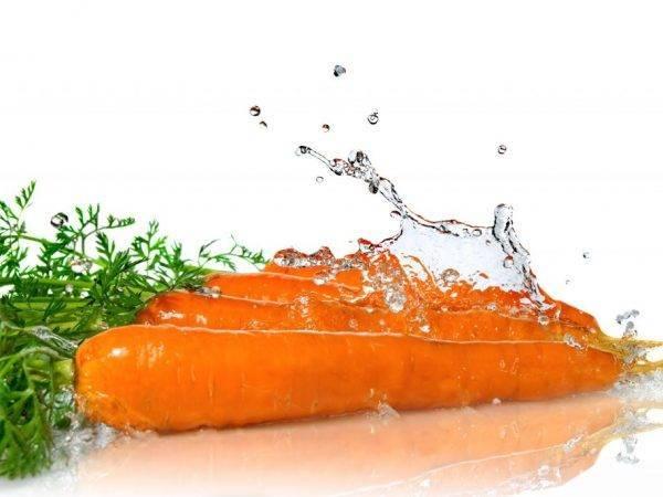 Когда и как правильно поливать морковь в открытом грунте