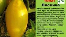 Теплолюбивый гибрид и его фото — томат «розовый король» f1: характеристика и описание сорта