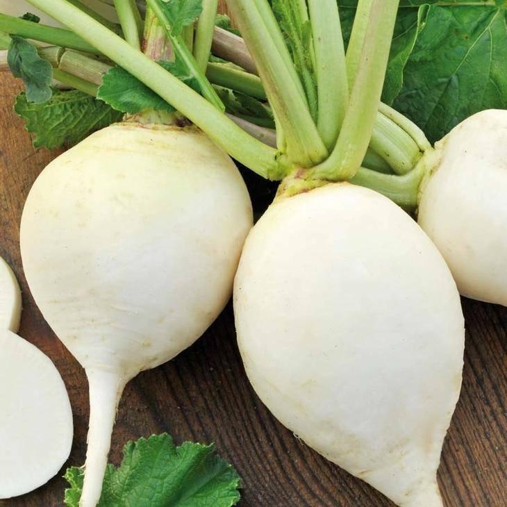 Что за овощ черная зимняя редька? когда сажать эту культуру, какой уход требуется и чем полезна?