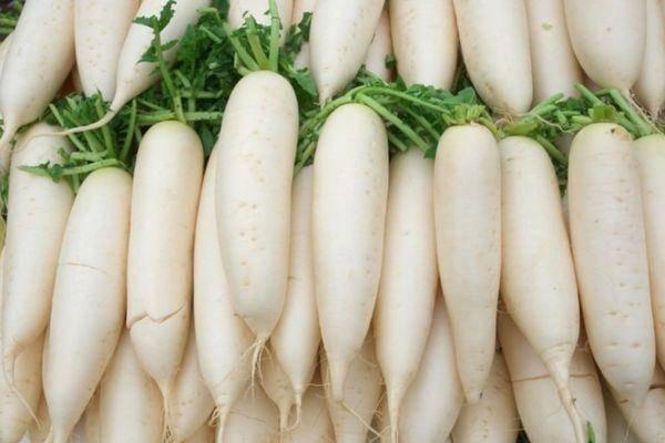 Всё о выращивании редьки дайкон в открытом грунте