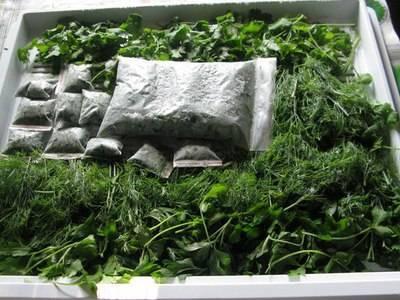 Способы длительного хранения зелени в холодильнике