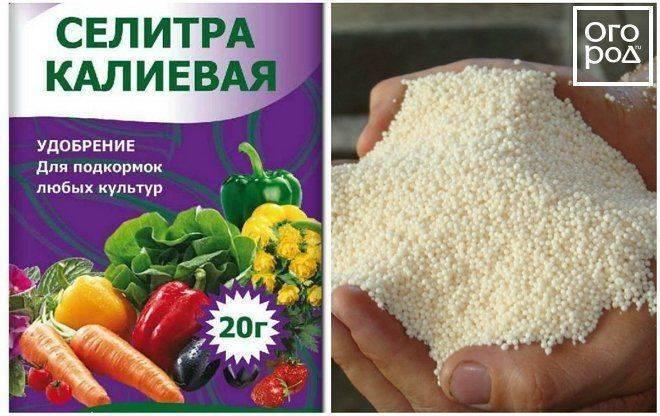 Правильный выбор калийного удобрения для подкормки огурцов