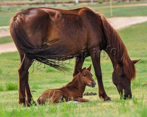 Сколько живут лошади в домашних условиях и в дикой природе