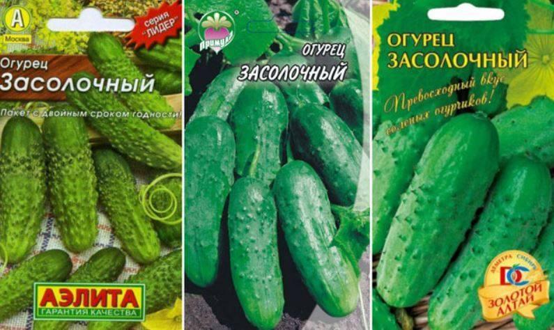 Огурец вязниковский: описание и характеристика сорта, мнение садоводов с фото