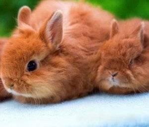 Разведение кроликов в домашних условиях для начинающих — как начать выращивать с нуля