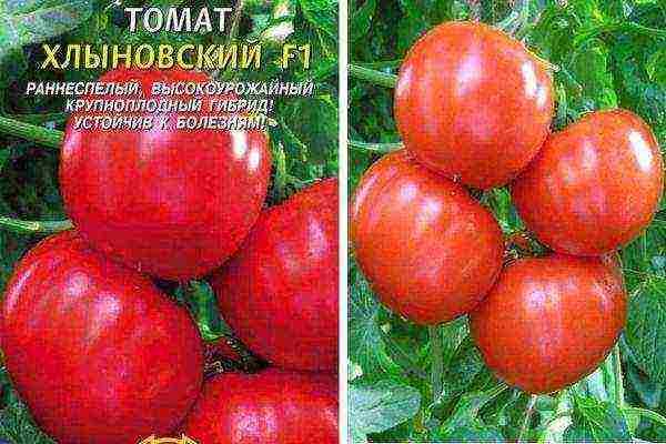 Новые сорта томатов на 2020 год сибирской селекции