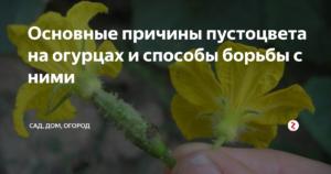 Причины пустоцвета на огурцах?