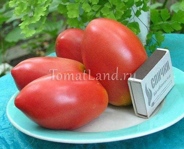Красивые и вкусные томаты «огни москвы»: ранний урожай для не слишком опытных садоводов