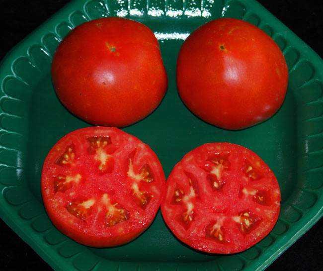 Как посадить и вырастить томат «подснежник»