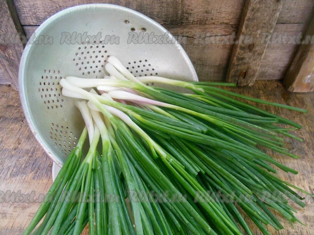 Как заготовить кинзу на зиму в домашних условиях, лучшие рецепты