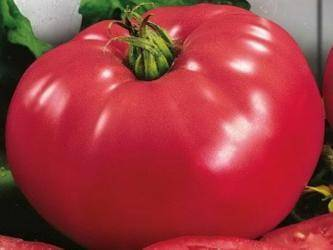 Выбор опытных садоводов — томат «розовое сердце» : описание сорта, достоинства и недостатки, советы по выращиванию