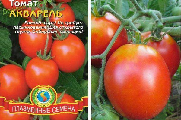 Характеристика и описание сорта томата Праздничный
