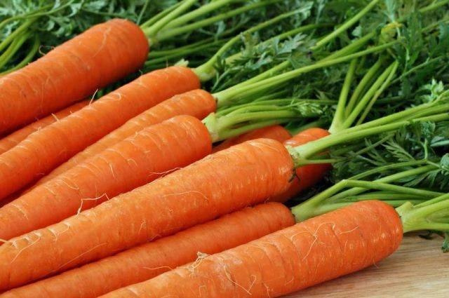 Можно ли посадить морковь в июле: летний посев, уход и выращивание