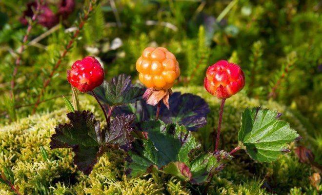 Очаровательный цветок купальница: особенности выращивания из семян, уход