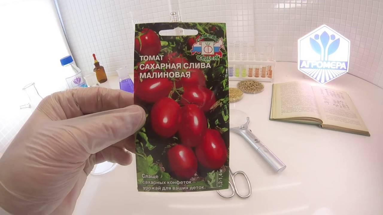 Томат белый сахар: описание и характеристика сорта, урожайность с фото