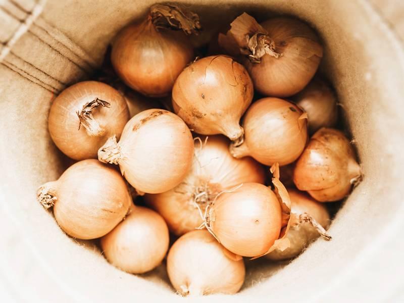 Лук бамбергер: описание сорта, фото, отзывы, посадка и уход, достоинства и недостатки и особенности выращивания
