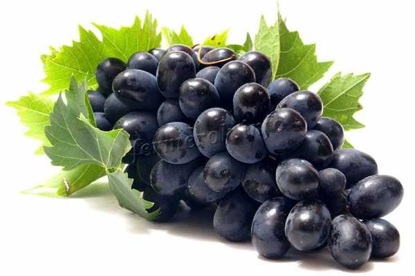 Все о сорте винограда кишмиш уникальный