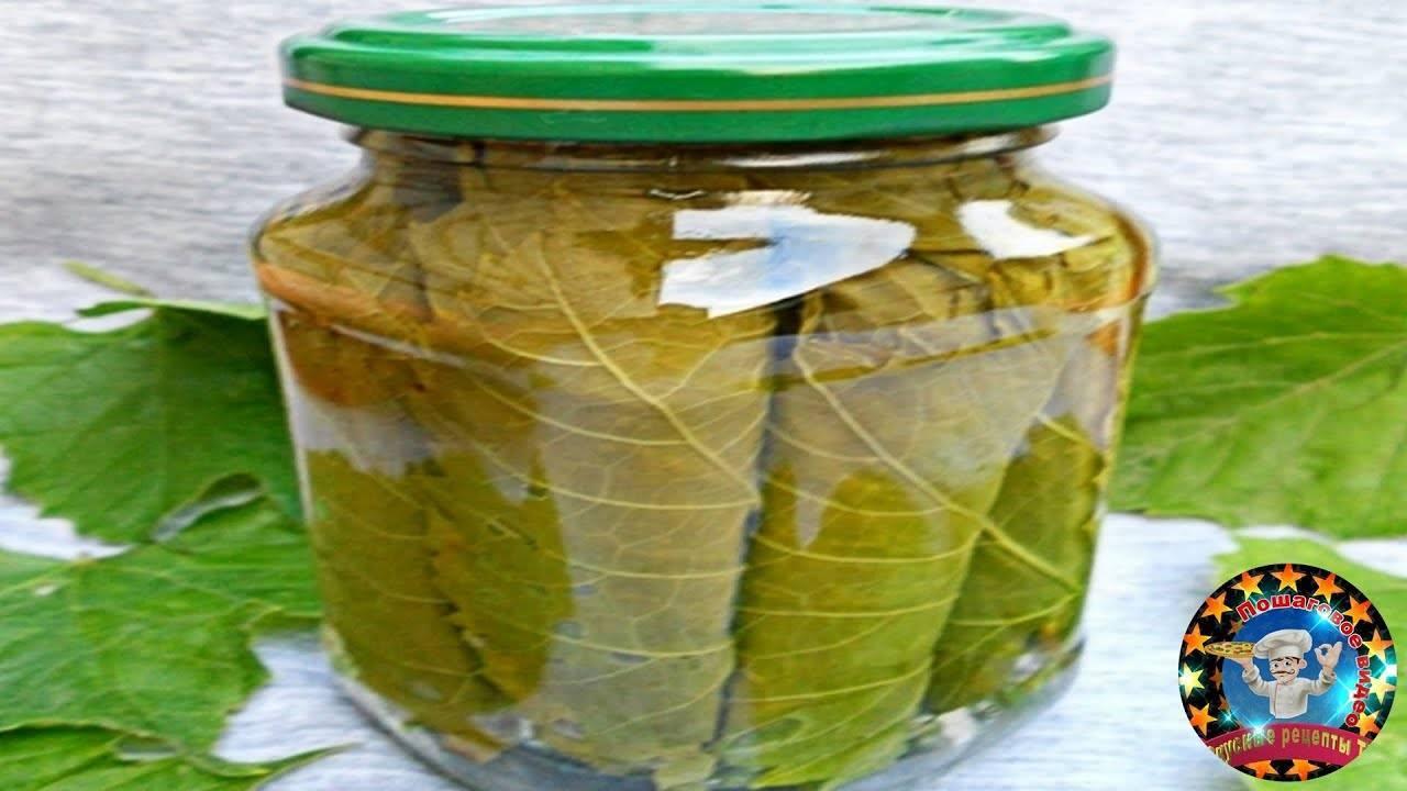 Рецепты маринования виноградных листьев на зиму
