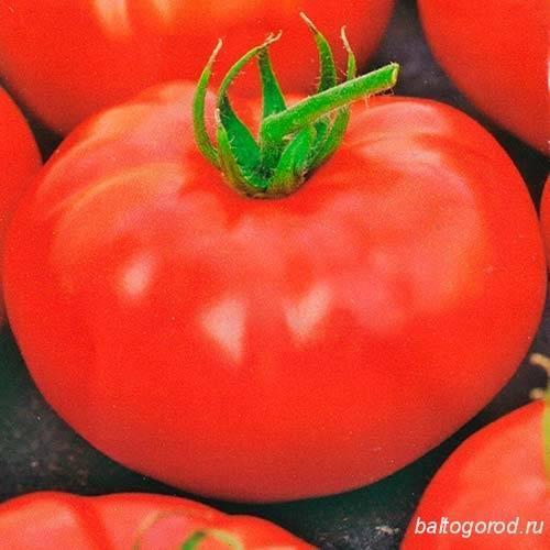 Мона лиза — все о культивации и применении томатов. полное описание агротехники