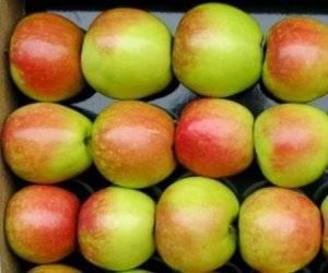 Описание и характеристики сорта райских яблок, посадка, выращивание и уход