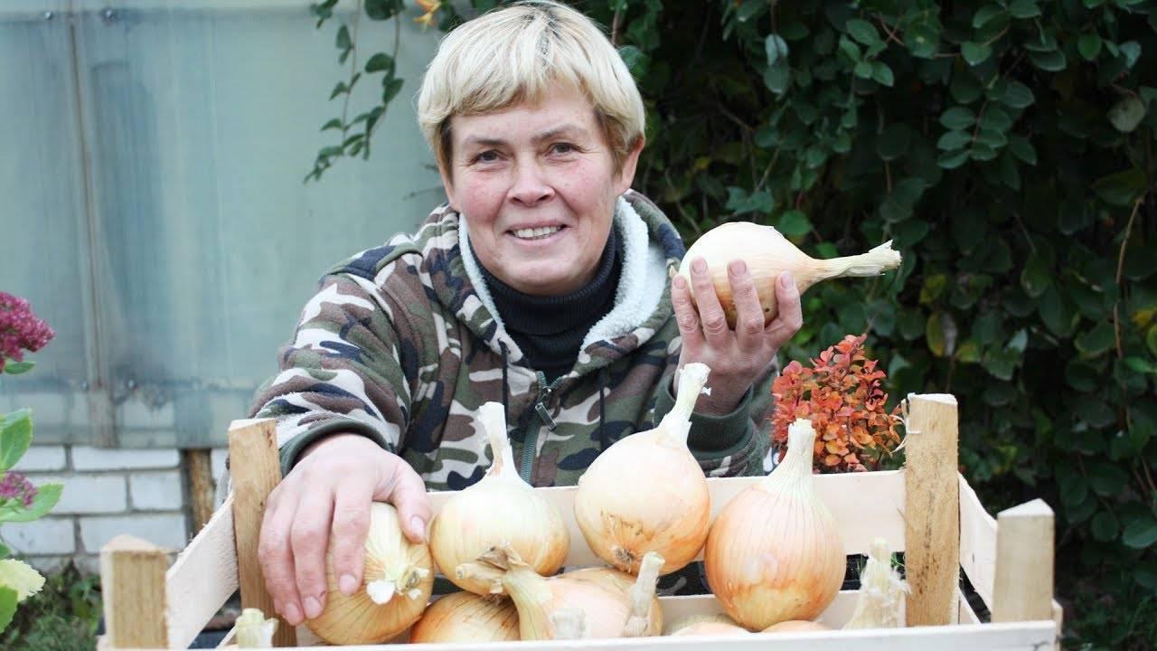 Когда собирать семена лука, и как их сохранить
