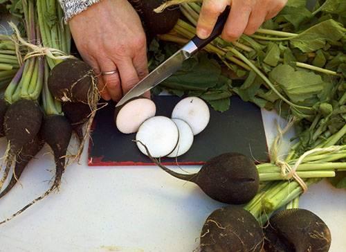Редька черная – польза и вред, состав, рецепты приготовления