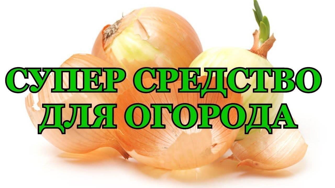Опрыскивание огурцов луковой шелухой: рецепты и нормы внесения