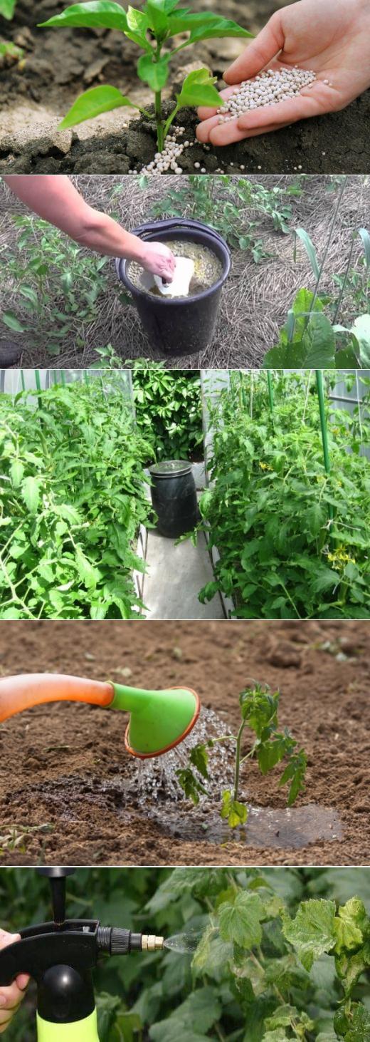Подкормка томатов борной кислотой