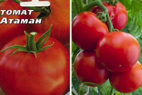 Томат царская ветка — описание и характеристика сорта