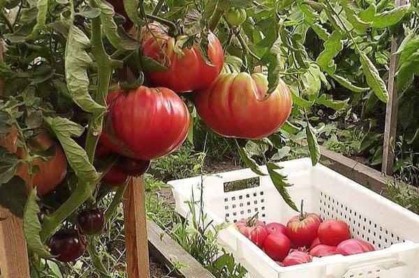 Биф-томат марманде — национальная реликвия франции