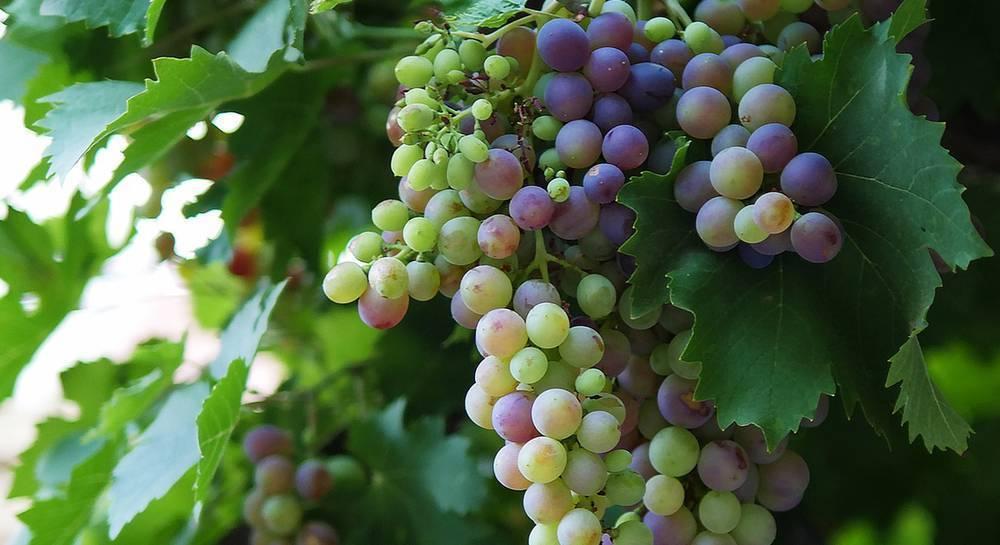 Пищевая сода: применение на огороде и в саду