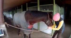 Гайд: разведение лошадей в black desert
