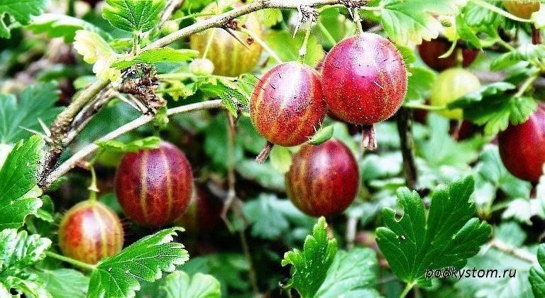 Все о болезнях и вредителях денежного дерева. лечение и фото пораженных растений