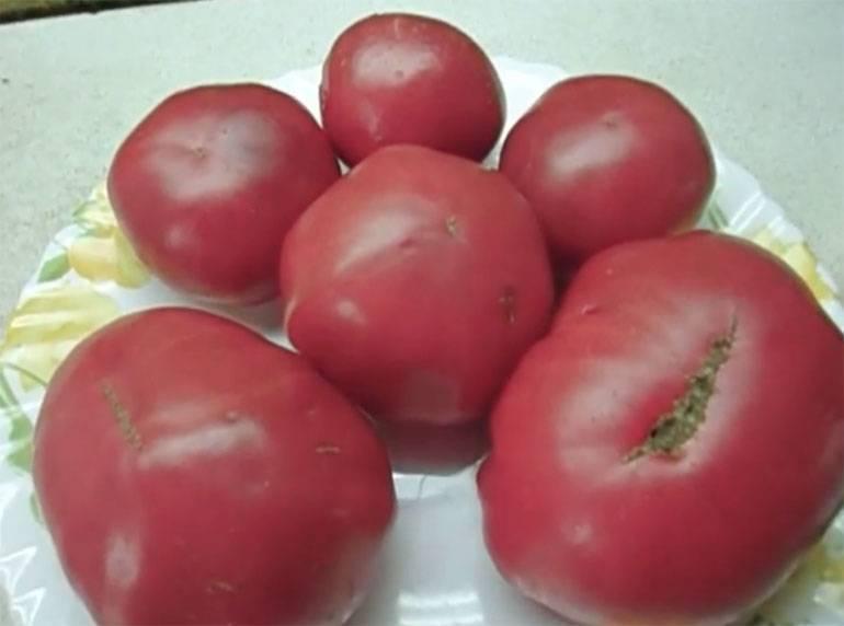 Об особенностях томата розовый спам: описание сорта и нюансы выращивания