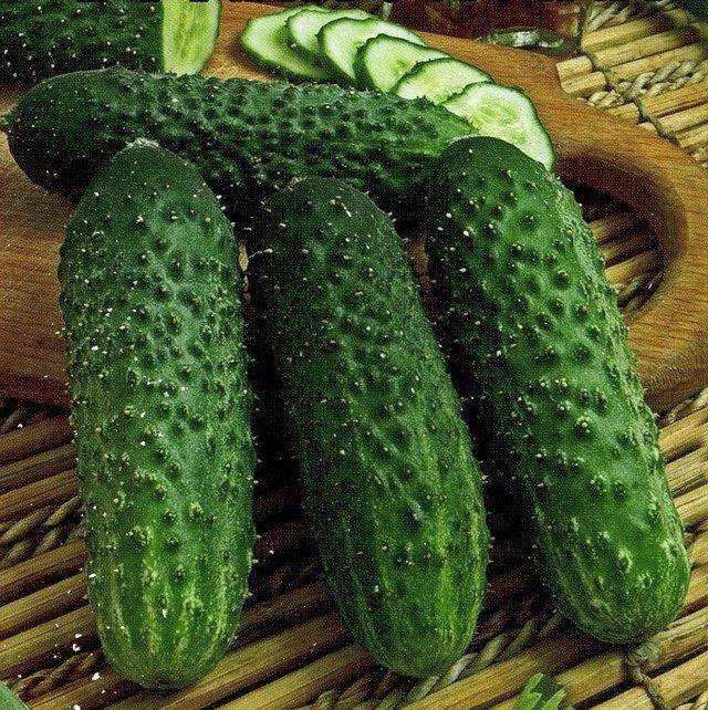 Сорт огурцов изящный: характеристика и особенности выращивания