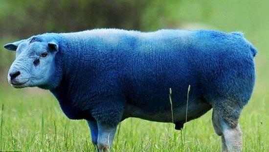 Как вывести вшей у коровы: народными средствами и медицинскими препаратами