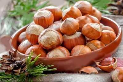 Шелковица в подмосковье: как выбрать сорт и получить урожай
