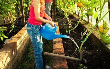 Как поливать помидоры капельным поливом