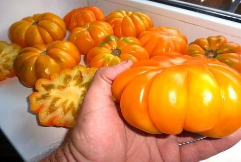 Томат лотарингская красавица: характеристика и описание сорта, урожайность с фото