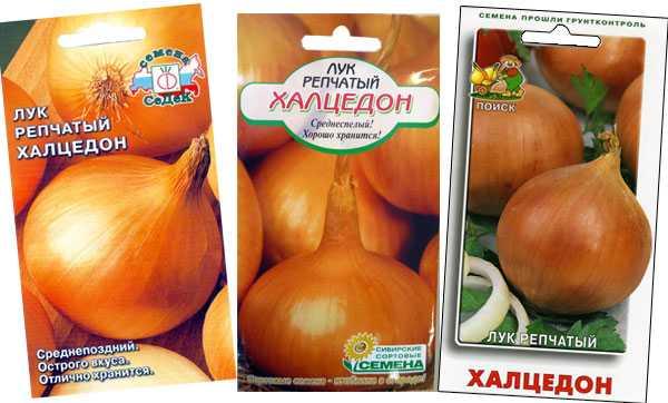 Вкусно и полезно: выращивание лука «халцедон» из семян и севка