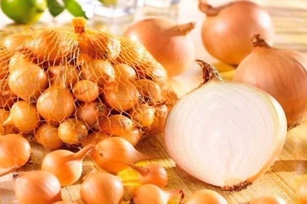 Лук штутгартер ризен: преимущества сорта, выращивание из семян и севка