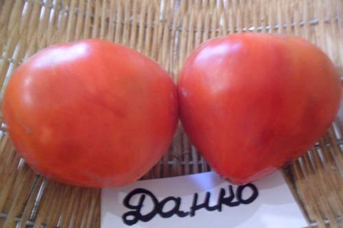 Какие особенности выращивания сорта помидор «т 34 f1»?