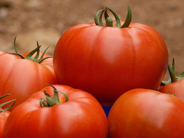 Сорт томата «белла роса»: описание, характеристика, посев на рассаду, подкормка, урожайность, фото, видео и самые распространенные болезни томатов