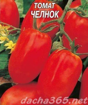 Универсального предназначения томат «челнок»
