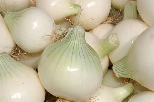 Белый лук: разновидности сортов, польза и вред, как правильно хранить