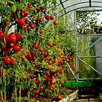 Выращивание рассады помидоров: как и когда посеять, ухаживать, пикировать