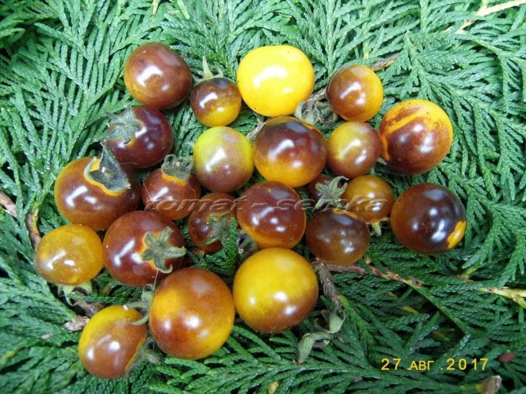 Описание сорта томата женская доля f1, его характеристики